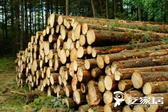 中国进口红木原木最多的企业居然是他?